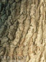 Éva és Anasztázia 1. rész - A parkban - 10. oldal